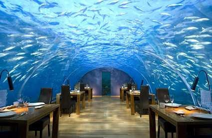 Underwater Luxury Honeymoon Suite With the Fishes 9