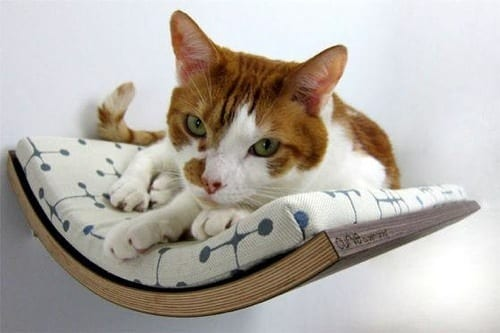 outrageous cat bed