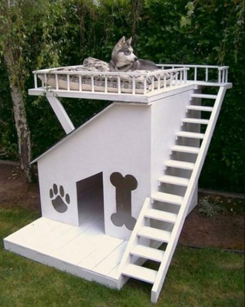 amazing dog house