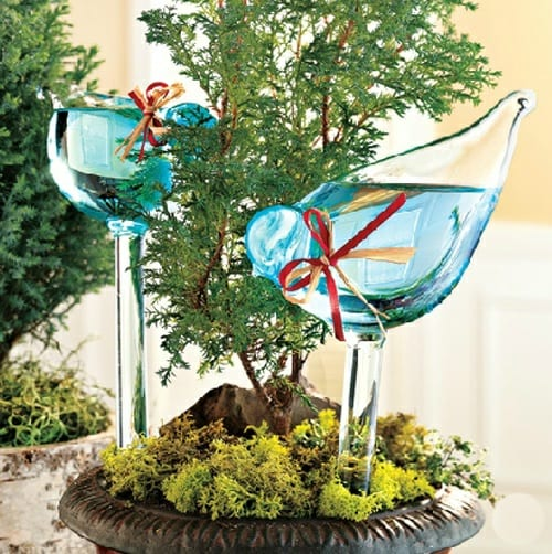 Aviary Glass Plant Feeder