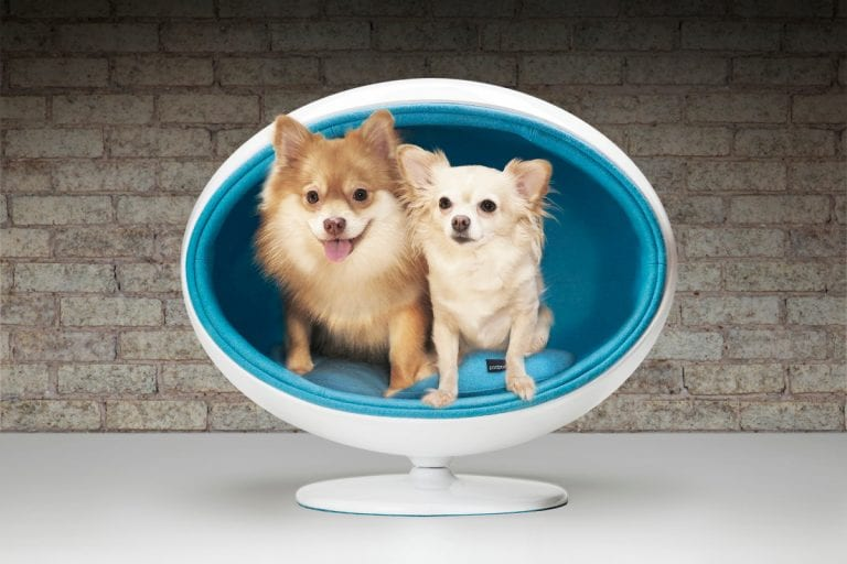 10 Crazy Pet Bed Designs that are Fun and Stylish 19